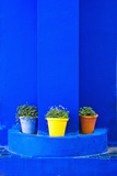 Potted Plants and Bright Blue Paintwork Photographic Print by Matthew Williams-Ellis