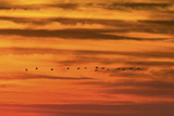 Pelicans at Sunset over Playa Guiones Surf Beach Photographic Print by Rob Francis