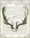 Regal Antlers on Newsprint II Posters af Sue Schlabach