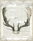 Regal Antlers on Newsprint II Posters by Sue Schlabach