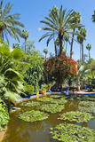 Pond and Palm Tree Photographic Print by Matthew Williams-Ellis