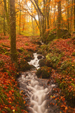 A Small Stream Running Through Charles Wood Photographic Print by Julian Elliott