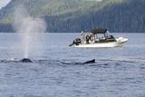 Fishermen Watching Humpback Whales in Quatsino Sound Photographic Print by Michael DeFreitas