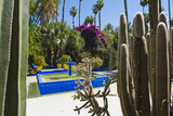 Blue Fountain and Cactus in the Majorelle Gardens (Gardens of Yves Saint-Laurent) Photographic Print by Matthew Williams-Ellis