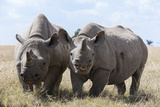 Two Rhinoceros, Ol Pejeta Conservancy, Laikipia, Kenya, East Africa, Africa Photographic Print by Ann and Steve Toon