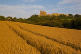 Bolsover Castle and Corn Field at Sunset, Bolsover, Derbyshire, England, United Kingdom, Europe Photographic Print by Frank Fell