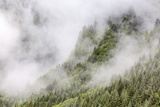 Fog-Shrouded Forest Near Juneau, Southeast Alaska, United States of America, North America Photographic Print by Michael Nolan