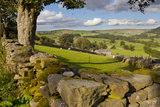 Farm Near Burnsall, Yorkshire Dales National Park, Yorkshire, England, United Kingdom, Europe Fotografisk trykk av Miles Ertman