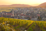 Overview of Riquewihr and Vineyards at Sunset in Autumn, Riquewihr, Alsace, France, Europe Photographic Print by Miles Ertman
