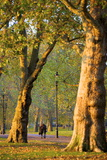 Walking in an Autumnal Hyde Park, London, England, United Kingdom, Europe Photographic Print by Neil Farrin