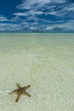 Sea Star in the Sand on the Rock Islands, Palau, Central Pacific, Pacific Photographic Print by Michael Runkel