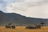 Elephant Herd (Loxodonta Africana), Masai Mara National Reserve, Kenya, East Africa, Africa Photographic Print by Ann and Steve Toon