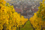 View of Riquewihr and Vineyards in Autumn, Riquewihr, Alsace, France, Europe Photographic Print by Miles Ertman