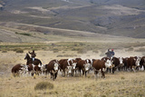 Gauchos with Cattle at the Huechahue Estancia, Patagonia, Argentina, South America Fotografisk tryk af Yadid Levy