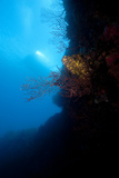 Reef Scene, Dominica, West Indies, Caribbean, Central America Photographic Print by Lisa Collins