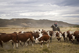 Gauchos with Cattle at the Huechahue Estancia, Patagonia, Argentina, South America Photographic Print by Yadid Levy