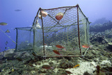 Fishing Cage in Dominica, West Indies, Caribbean, Central America Photographic Print by Lisa Collins