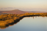 Keepers Pond, Blorenge, Sugar Loaf Mountain, Brecon Beacons, Wales, U.K. Photographic Print by Billy Stock