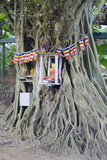 Buddhist Tree Shrine, Southern Province, Sri Lanka, Asia Photographic Print by Christian Kober