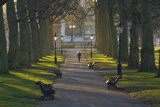 Sunrise, Green Park, London, England, United Kingdom, Europe Photographic Print by James Emmerson