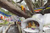 Shrine on a Bodhi Tree, UNESCO World Heritage Site, Kandy, Hill Country, Sri Lanka, Asia Fotografie-Druck von Christian Kober