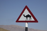 Camel Road Sign, Wahiba, Oman, Middle East Photographic Print by Angelo Cavalli