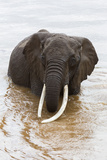 Elephant (Loxodonta Africana) in the River, Masai Mara National Reserve, Kenya, East Africa, Africa Photographic Print by Ann and Steve Toon