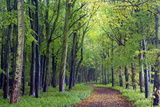 Beech Woodland in Spring with Path Snaking Between the Trees Photographic Print by Lee Frost