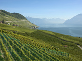 Lavaux Terraced Vineyards on Lake Geneva, Montreux, Canton Vaud, Switzerland, Europe Photographic Print by Angelo Cavalli