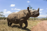 Rhino, Lewa Wildlife Conservancy, Laikipia, Kenya, East Africa, Africa Photographic Print by Ann and Steve Toon