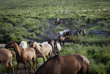 Gaucho with Horses at Estancia Los Potreros, Cordoba Province, Argentina, South America Photographic Print by Yadid Levy