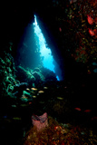 Swim Through, Dominica, West Indies, Caribbean, Central America Photographic Print by Lisa Collins