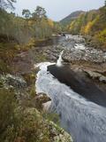 River Affric Flowing Through Silver Birch and Scots Pine Woodland in Autumn, Glen Affric, Scotland Stampa fotografica di Mark Hamblin