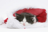 Black-And-White Kitten Asleep in a Father Christmas Hat Photographic Print by Mark Taylor