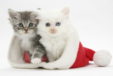 White Kitten and Tabby Kitten in a Father Christmas Hat Photographic Print by Mark Taylor