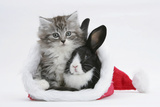 Maine Coon Kitten, 8 Weeks Old, and Baby Dutch X Lionhead Rabbit in a Father Christmas Hat Photographic Print by Mark Taylor