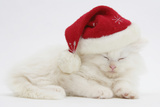 White Maine Coon Kitten Asleep Wearing a Father Christmas Hat Photographic Print by Mark Taylor