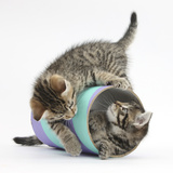 Two Cute Tabby Kittens, Stanley and Fosset, 7 Weeks, Playing with a Tube Photographic Print by Mark Taylor