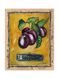 Plums Giclee Print by Jennifer Garant