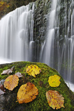 Autumn Leaves on Mossy Rock in Front of Sgwd Isaf Clun-Gwyn Waterfall. Brecon Beacons Np, Wales Photographic Print by Andy Rouse