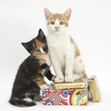 Ginger-And-White and Tortoiseshell Kittens on Birthday Parcels Photographic Print by Mark Taylor