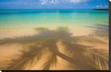 Palm Shadow Paradise Stretched Canvas Print by Jim Zuckerman