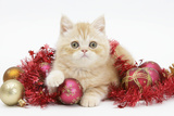 Ginger Kitten with Red Tinsel and Christmas Decorations Photographic Print by Mark Taylor