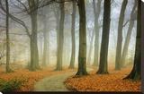 Misty Twisty Stretched Canvas Print by Lars Van de Goor
