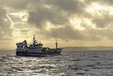 Fraserburgh Pelagic Trawler Fishing for Atlantic Mackerel (Scomber Scombrus) Shetland Isles, UK Photographic Print by Chris Gomersall
