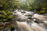 River Plym Flowing Through Dewerstone Wood, Dartmoor Np, Devon, England, UK, October Photographic Print by Ross Hoddinott