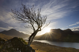 Rowan Tree Silhouetted Above Loch Lurgainn with Cul Mor (Left) and Ben More Coigach Beyond, UK Photographic Print by Mark Hamblin