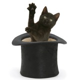 Black Kitten, Charkle, 10 Weeks, Popping Out of a Black Top Hat Photographic Print by Mark Taylor