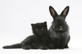 Black Kitten with Black Lionhead-Cross Rabbit Photographic Print by Mark Taylor