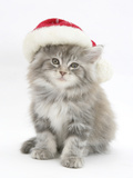 Maine Coon Kitten Wearing a Father Christmas Hat Photographic Print by Mark Taylor